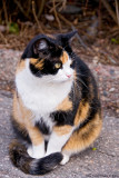 Look what a lovely calico-cat lady we met today!