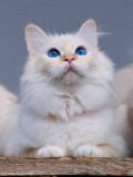 Darling, new kitten next door