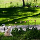 Fia has a zen-moment an early summer day...