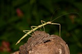 IMG_0923 walking stick.jpg