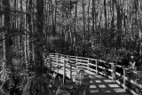 Corkscrew Swamp Sanctuary