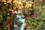 Metzgus Creek, Curry Co. OR