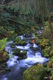 Elk Creek, Eden Ridge, Coos Co. OR