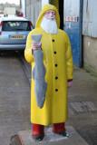 Yellow coat fish