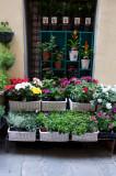 Street Scenes, Windows of Italy