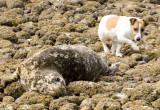 Seal and JR