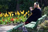 Capturing the Joy of Tulips