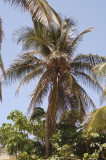 Varadero International Palm 6-7-001-51.jpg