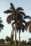 Varadero Palm 6-6-001-6.jpg
