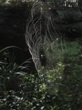 Early Morning Web
