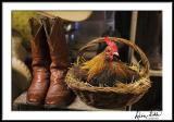Chicken and Boots