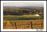 Fall Afternoon Vineyard