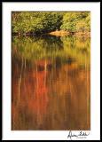 Fall Lake Abstract