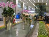 Incheon airport  7