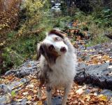 Buddy the Canyon Dog Volume 1