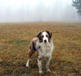 Fog Dog