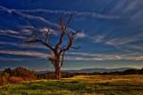 Boyton Valley Tree  # 8102_4_3 TM  See Same B&W Next