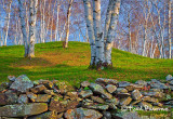 MG_9761 Stonewall & Birches VT