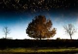 IMG_0671 - The Magic Tree