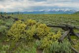 Antelope Flats Fenceline