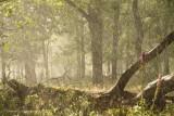 Regen en zon in een eikenbos - Rain and sunshine at an oak forest