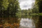 Forest lake - Bosmeertje