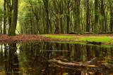 Bospoel - Pool in the woods