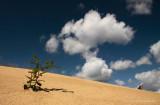 Sanddrift - Zandverstuiving 2