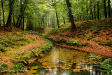 Early autumn - Vroege herfst, sprengen