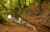 Brook at an autumn forest - Beek in een herfstbos