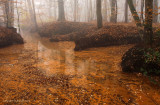 Mistig sprengenbos - Red brook, fog