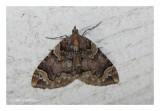 7208 - Eulithis serrataria - Serrated Eulithis Moth