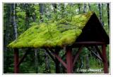 Au Parc de la Gaspésie les toits sont verts ...