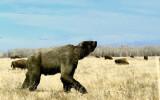 Short-faced bear  (recreation)