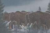Wooly mammoth herd  (recreation)