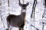 The Riverwood Deer Project: The Year of the Deer