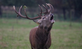 Gallery: Mammals of Scotland