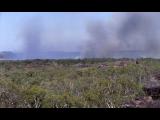 Gallery: Wild Australia