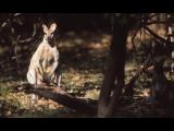 Australian Mammal Gallery