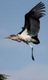 Tanzania 2012 Birds