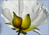 AM_ W Flower_03092012_022.jpg