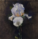Iris Study 8 1/2 8 1/2