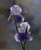 Double Iris 18 5/16 x 15