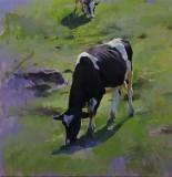 Advancing Cows 14 1/16 x 13 3/4