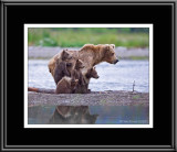 88057 Grizzly Sow with Cubs (unframed)