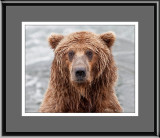40_11880E Grizzly Head Shot (unframed)