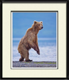 88024c - Grizzly Sow (unframed)