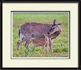 49520 - Fawn with Mother   (unframed)