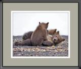 88516  - Playful Cubs     (unframed)
