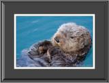 69582  -  Sea Otter  (unframed)